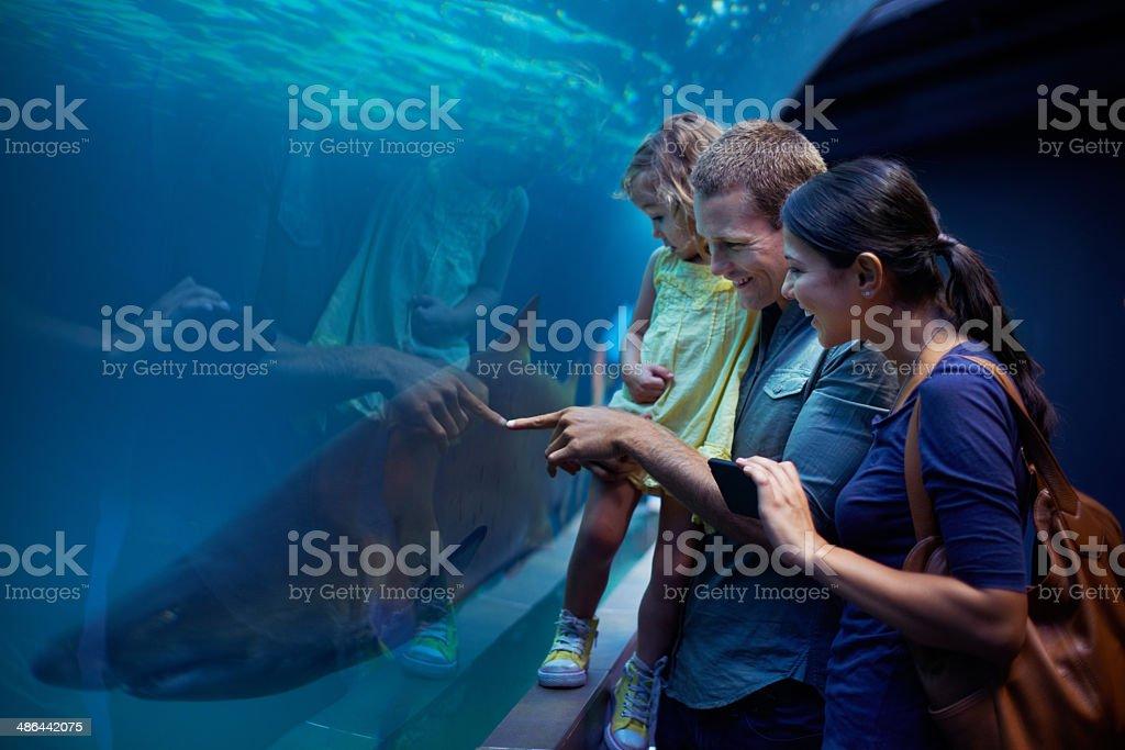 Mostrando seu os tubarões - foto de acervo