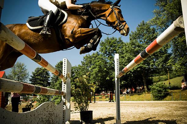 showjumping - hästhoppning bildbanksfoton och bilder