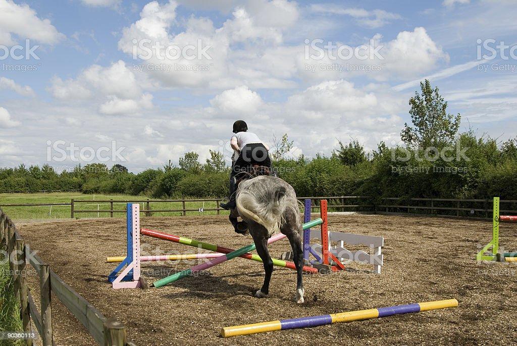 Showjumping white irish draft horse stock photo