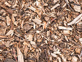 Shredded bark and pieces of wood.