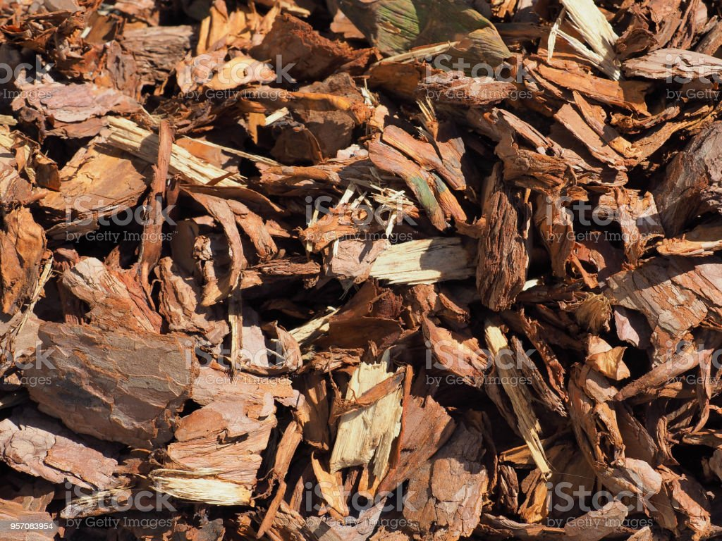 Shredded Brown Bark Background Closeup Wood Mulch Chips From Pine ...