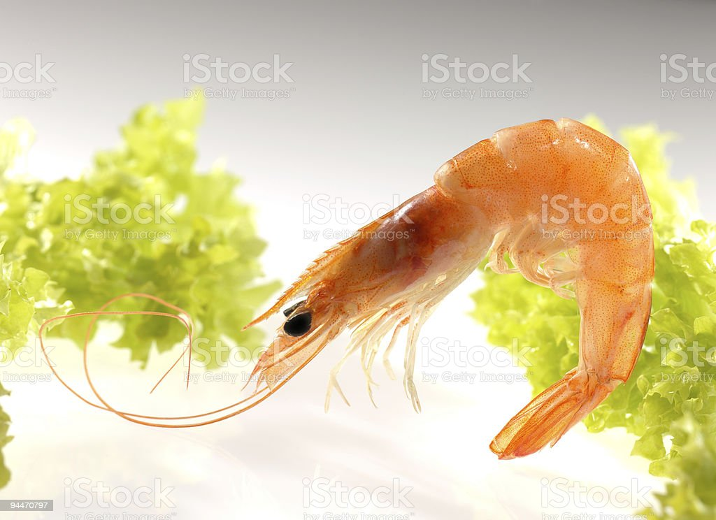shrimp and lettuce stock photo