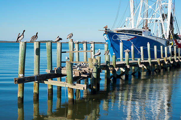 Shrimp boat and pelicans stock photo