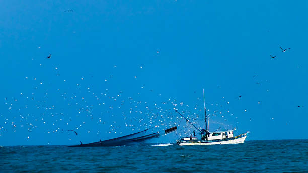 Shrimp Boat in the Gulf of Mexico stock photo