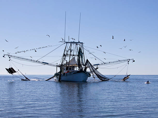 Royalty free shrimp boat pictures images and stock photos for Stock fish for sale texas