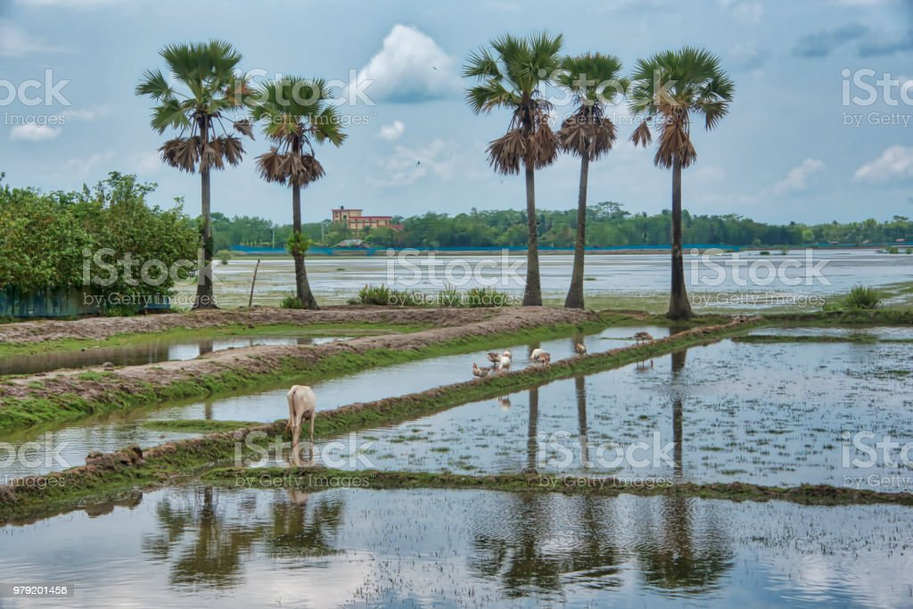shrimp farm in Monsoon stock photo