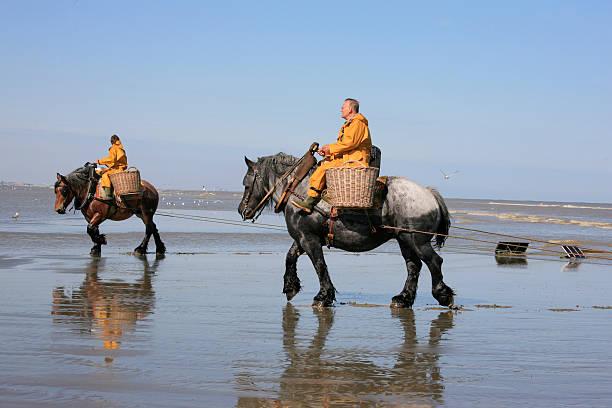 Garnelen Fischer zu Pferd, Oostduinkerke, Belgien – Foto
