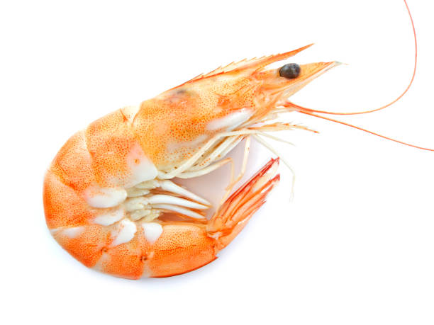 Royalty Free Raw Pink Shrimp Pictures Images And Stock Photos Istock