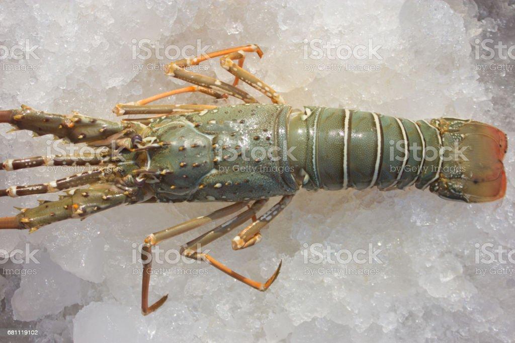 Shrimp on ice royalty-free stock photo
