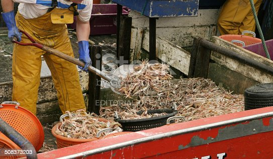 Kinsale, Ireland - July 2, 2006: An anonymous shrimper in the town of Kinsale in the southwestern part of Ireland shovels a load of shrimp into red buckets in order to carry them from the hold to the sorting table.