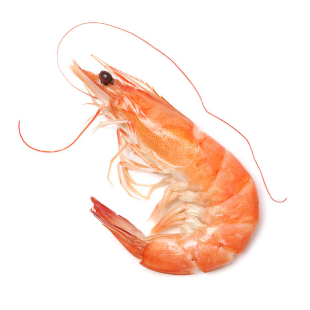 shrimps on a white background – zdjęcie