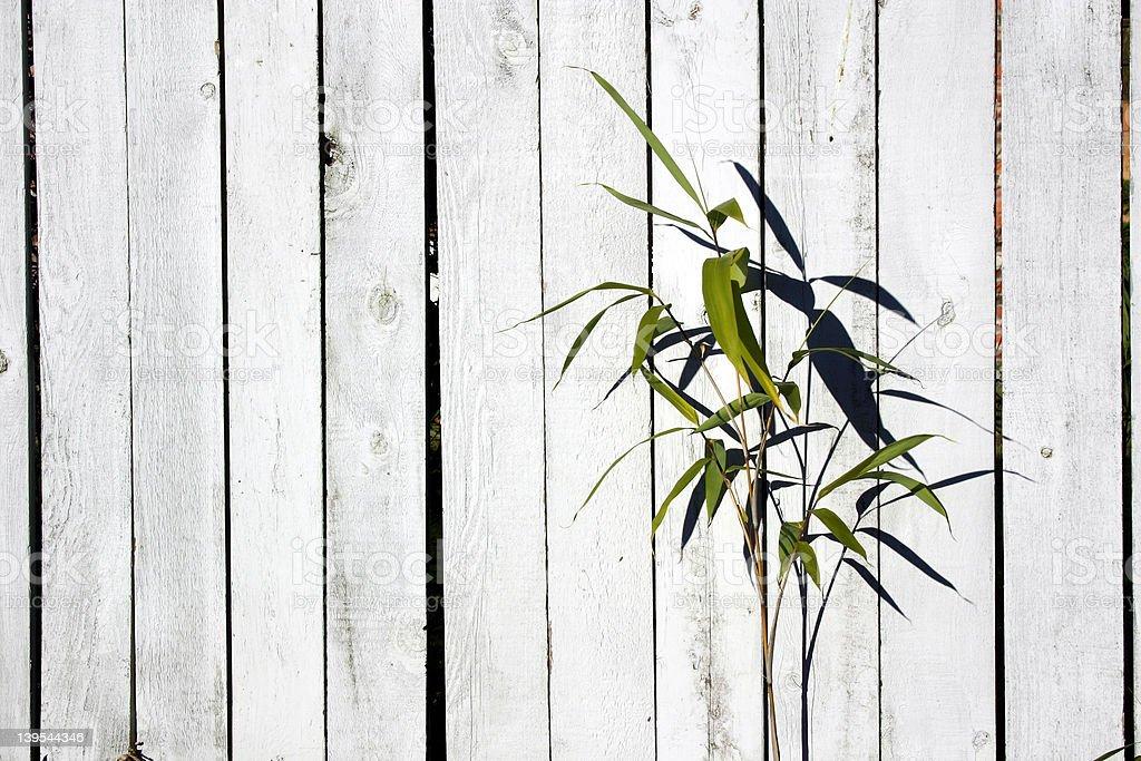 Shrub on Fence royalty-free stock photo