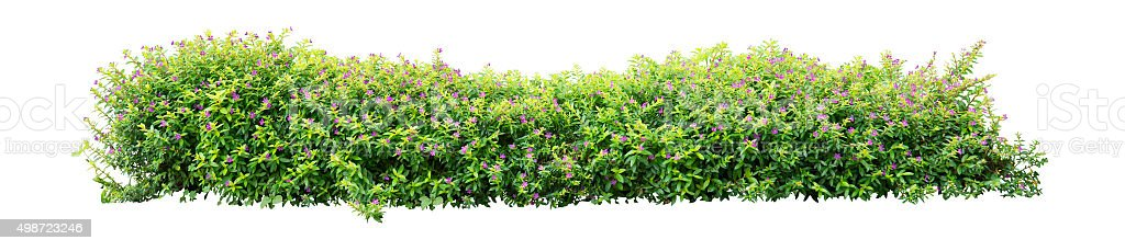 Shrub - foto de stock