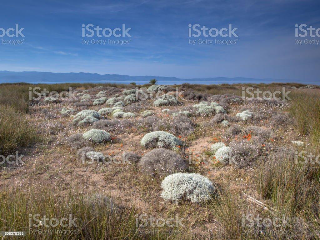 Shrub vegetation Alykes wetlands sheepfields stock photo