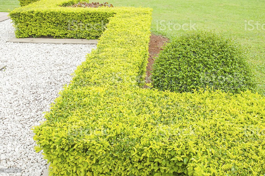 Shrubbery royalty-free stock photo