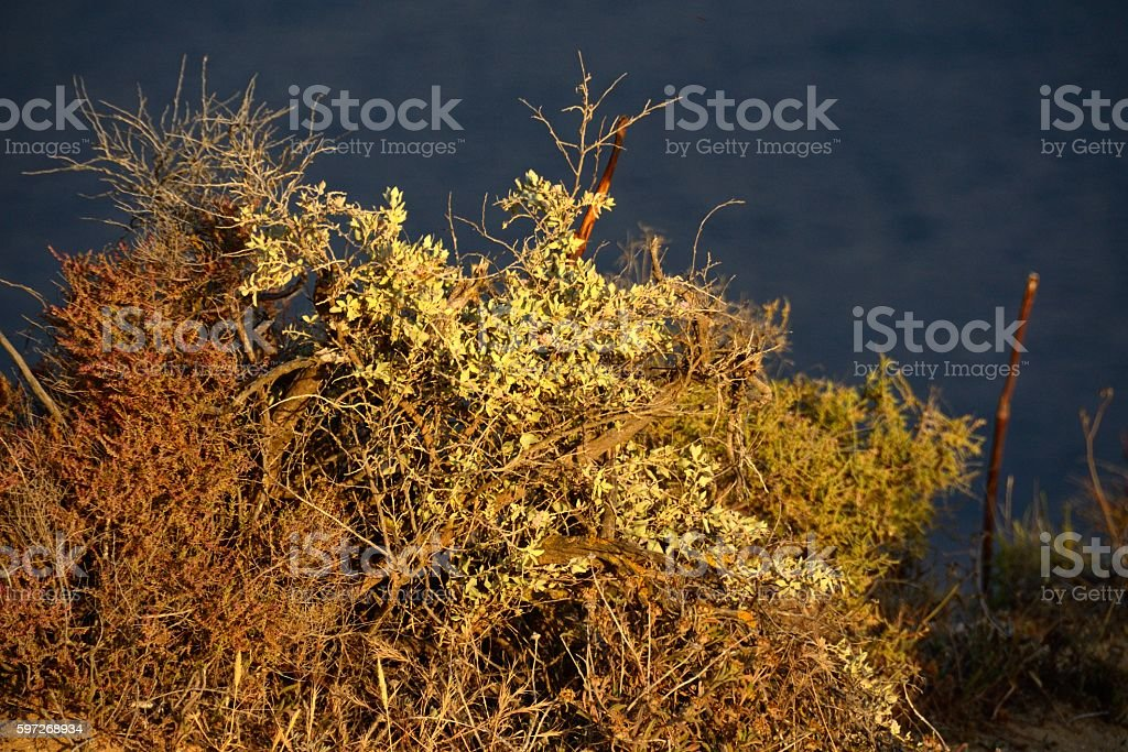 Arbustos en Ponta da Piedade, Lagos royalty-free stock photo