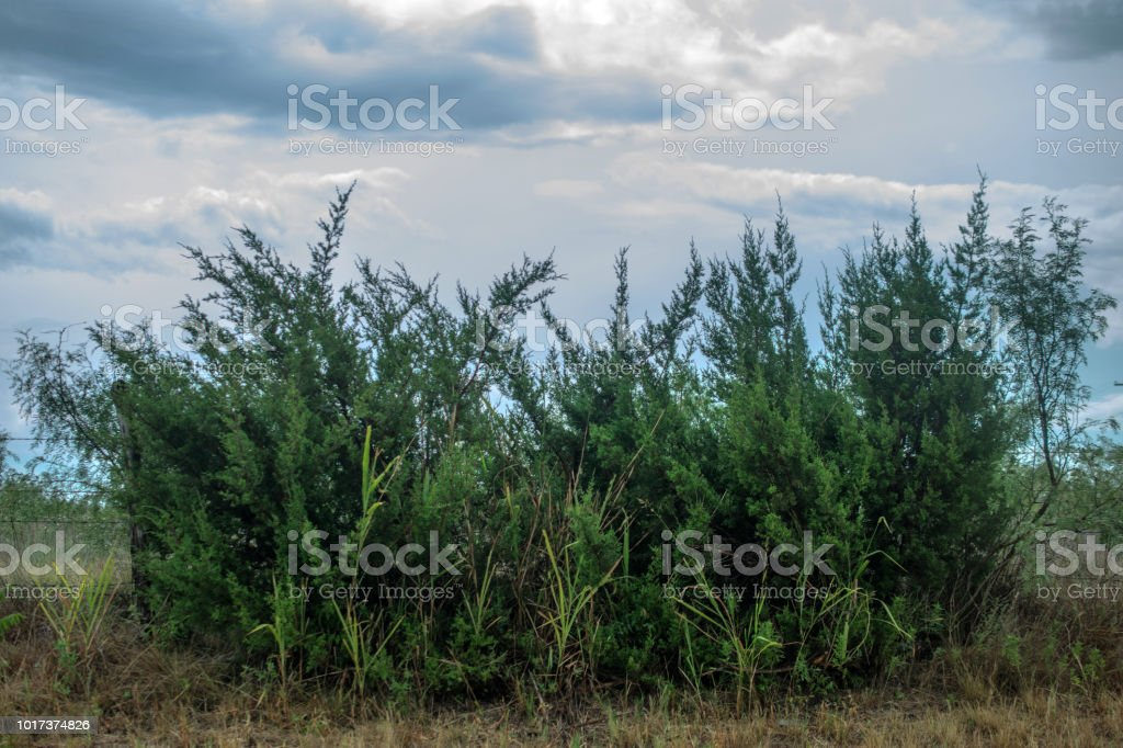 shrubs on roadside with clouds stock photo