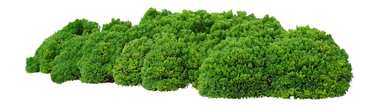 Shrubs trimmed into round shape