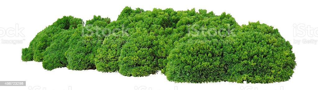 Arbustos autóctonos - foto de stock