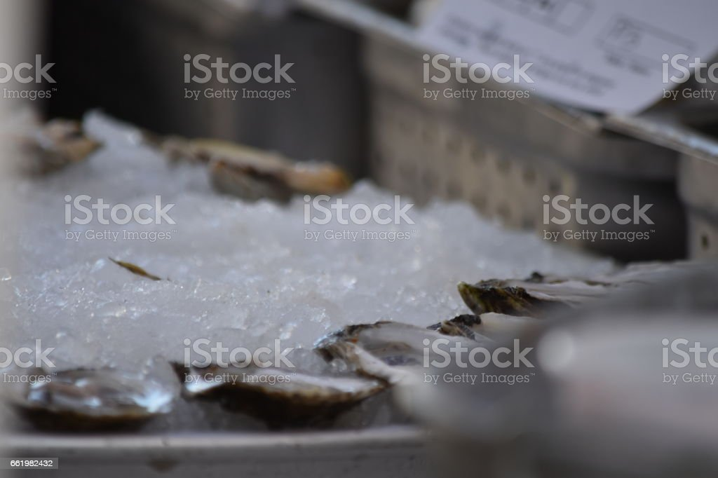 Shucked Oysters royalty-free stock photo