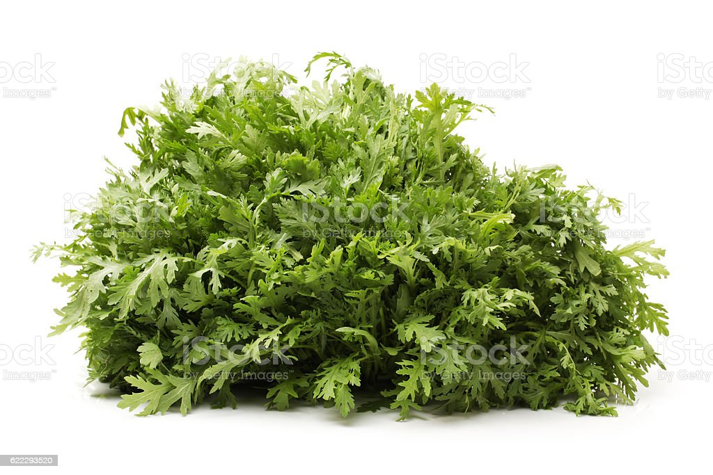 Shungiku, also known as tong hao,   edible chrysanthemum, stock photo