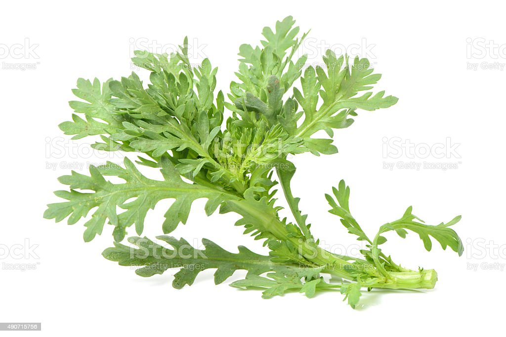 Shungiku, also known as tong hao, or edible chrysanthemum stock photo