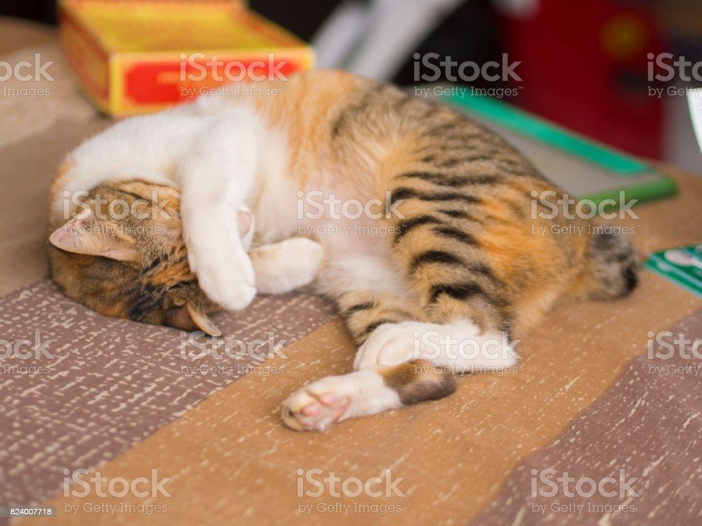Gato tímido na cama - foto de acervo