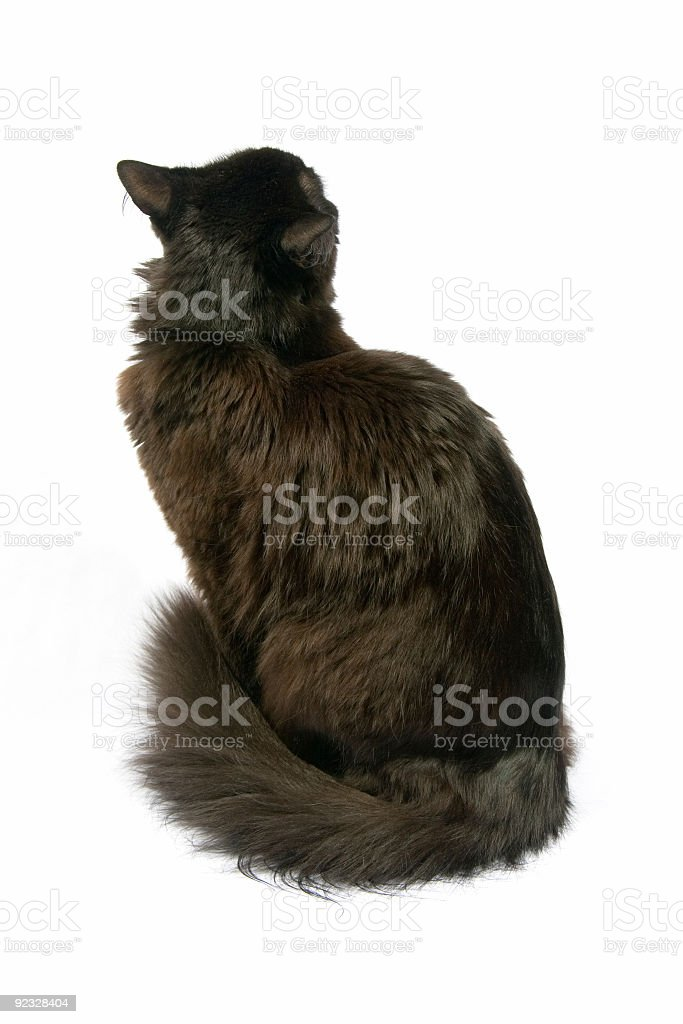 shy cat royalty-free stock photo