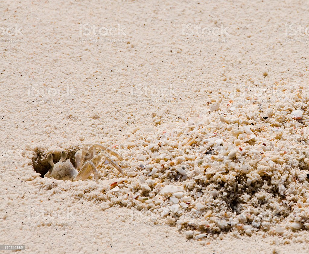 Shy Ghost Crab royalty-free stock photo