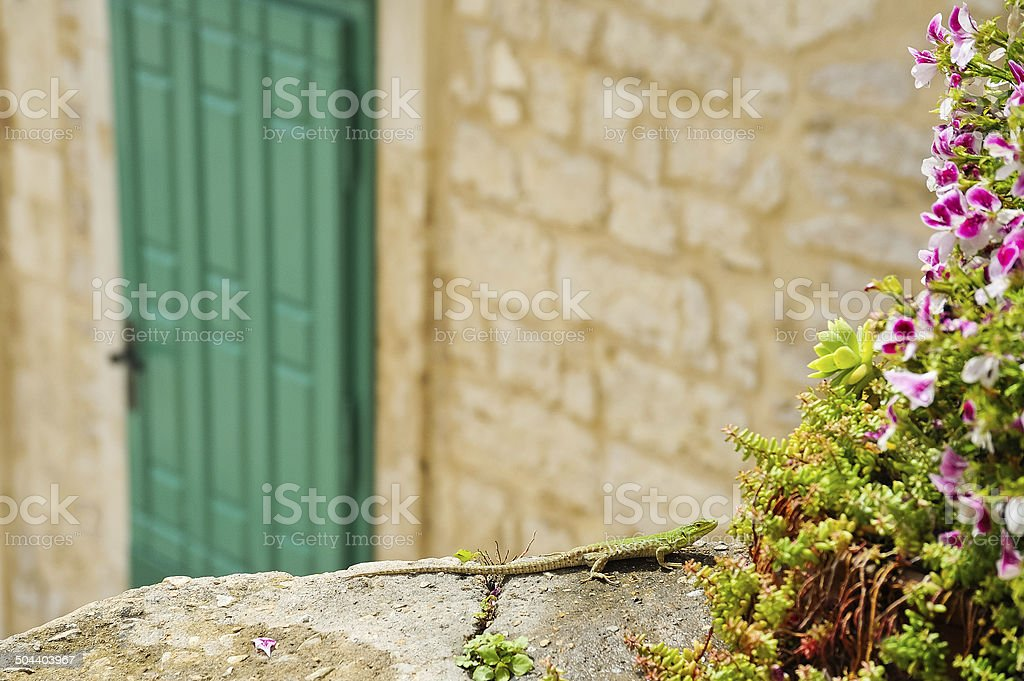 Shy lizard on a wall stock photo