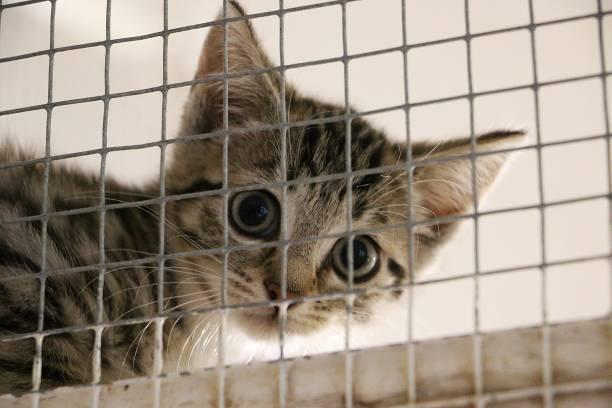 schüchternes kleines Kätzchen sitzt hinter dem Zaun und wartet auf seine neuen Menschen – Foto