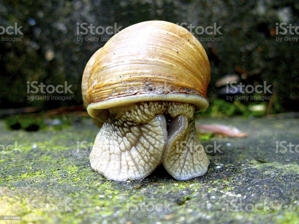 Shy Snail royalty-free stock photo