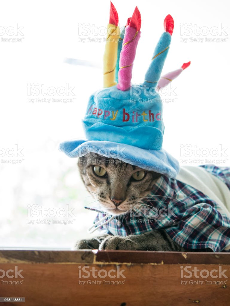 Siamese Cat On Wood Table With Happy Birthday Hat