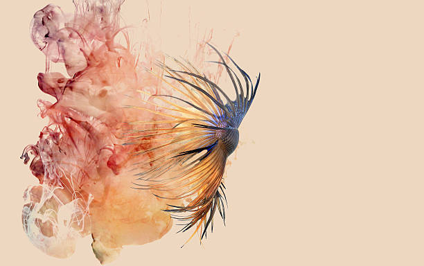 Siamese fighting fish and color ink drop. stock photo