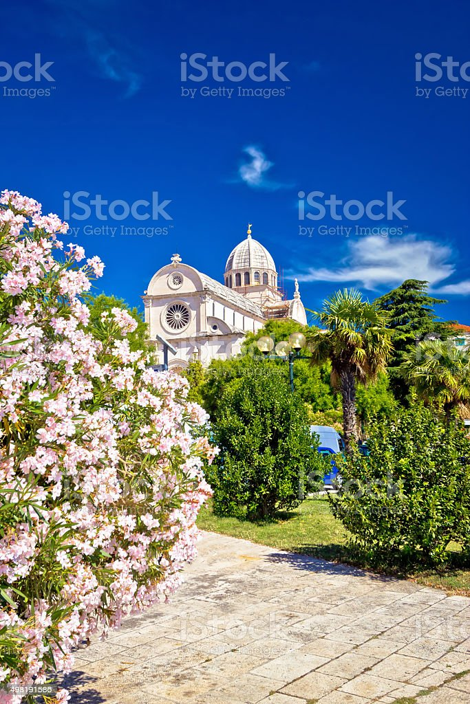 Sibenik cathedral in spring flowers vertical view stock photo
