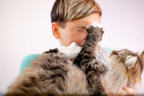 Image result for cat scratching human face