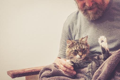 istock Siberian forest cat  having a bath 658501728