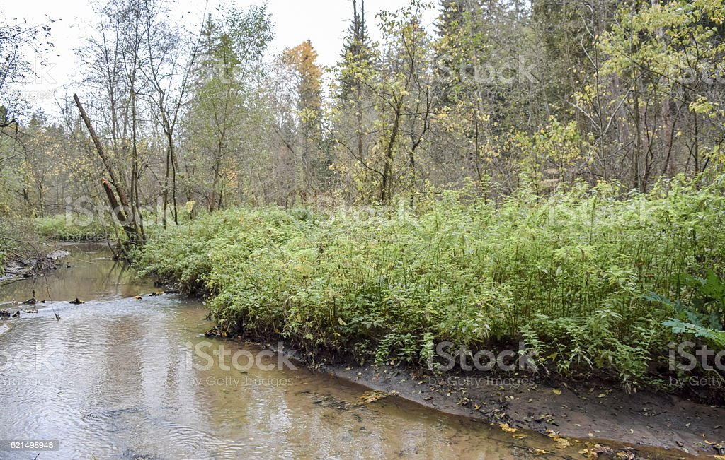 Siberian forest in Autumn. Russia foto stock royalty-free