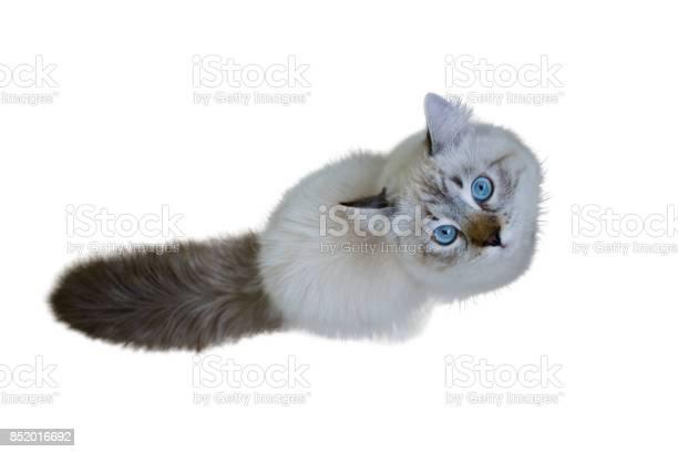 Siberian neva masquerade cat picture id852016692?b=1&k=6&m=852016692&s=612x612&h=qazhn7mfstq0ytk18ojt7xixisxrabqy1xmikwmytmq=