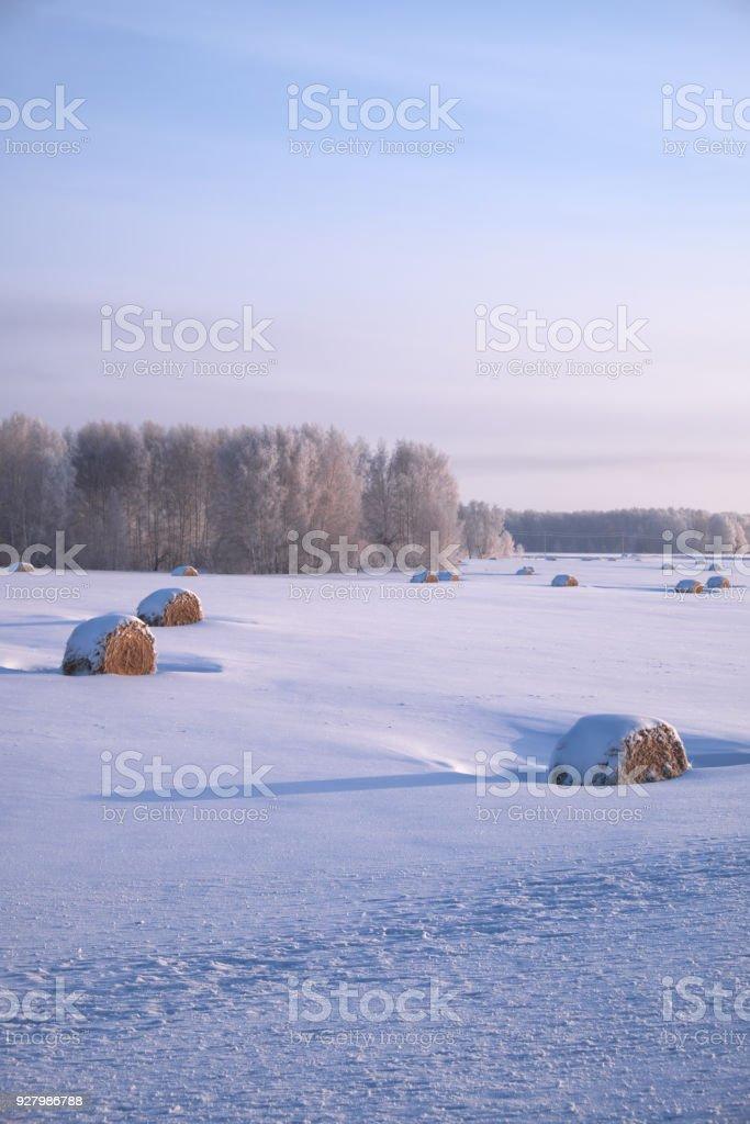 Sibirische ländlichen Winterlandschaft mit Heu rollt im Feld unter dem Schnee mit Birkenwald auf Hintergrund – Foto