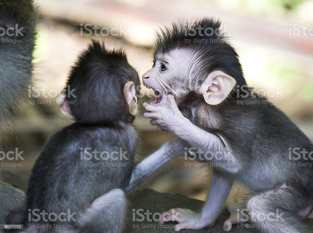sibling secrets stock photo