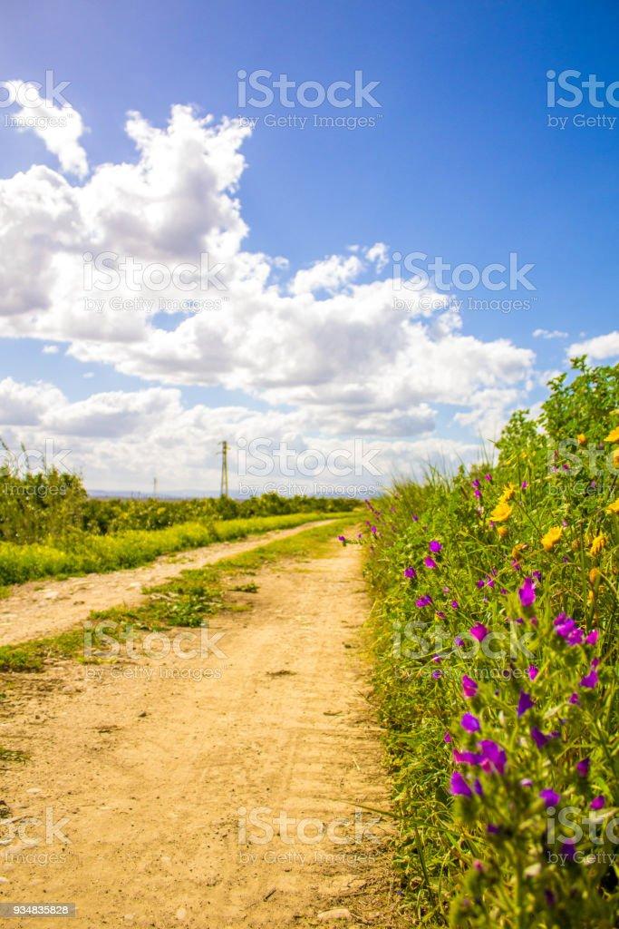시칠리아 시골 트랙 - 로열티 프리 0명 스톡 사진