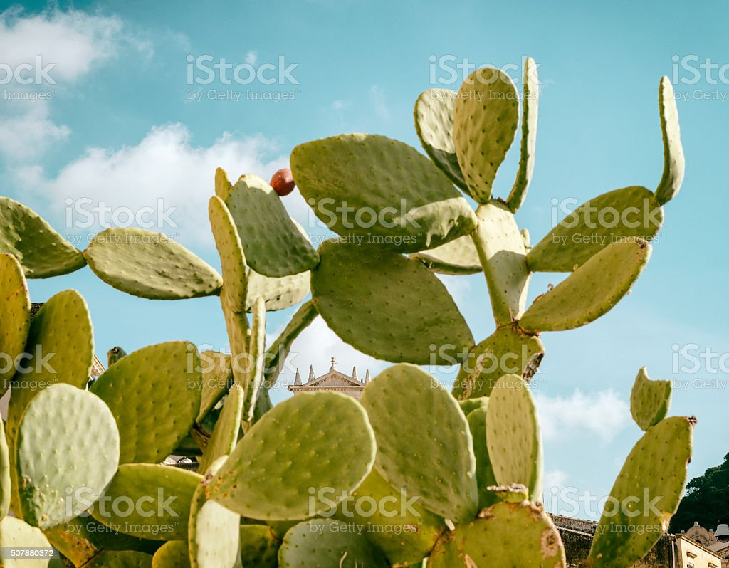 Sicilian prickly pear stock photo