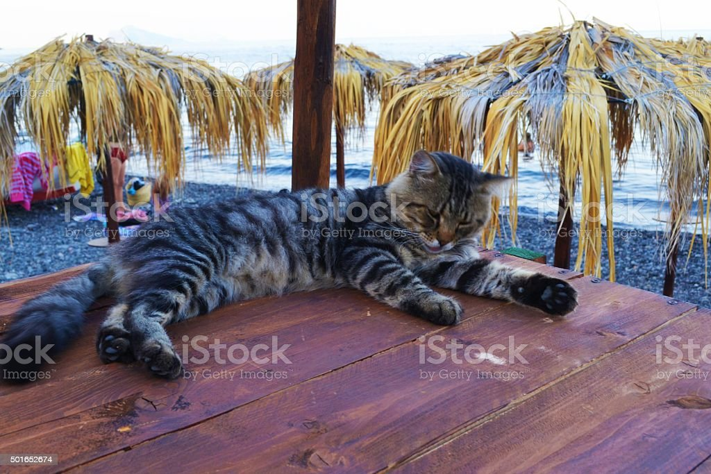 Sicily, Cat on the beach stock photo