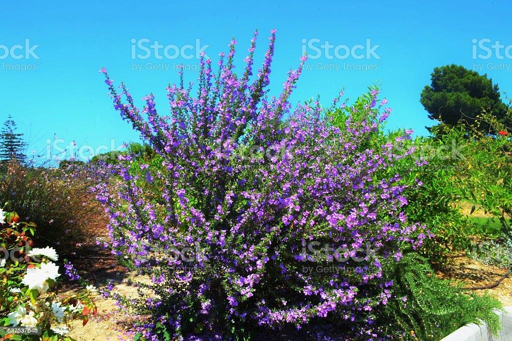 Sicilia stock photo