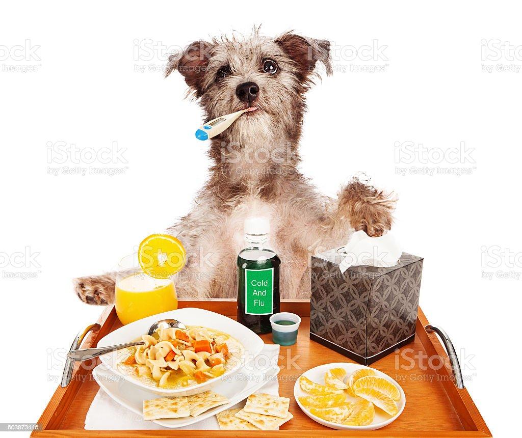 Sick as a Dog stock photo