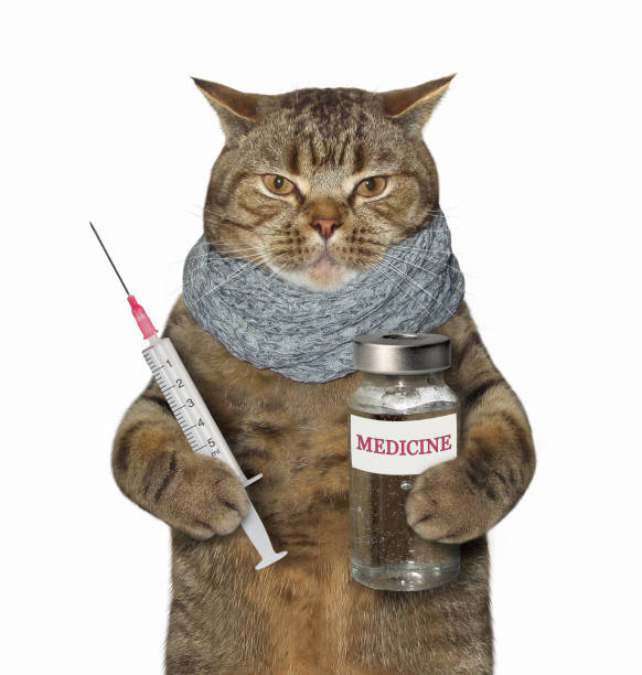 Sick cat holds a syringe and medicine picture id1004718026?b=1&k=6&m=1004718026&s=612x612&w=0&h=pppizezjlzgxhpy57wein53anni3ckzcblkphighip0=