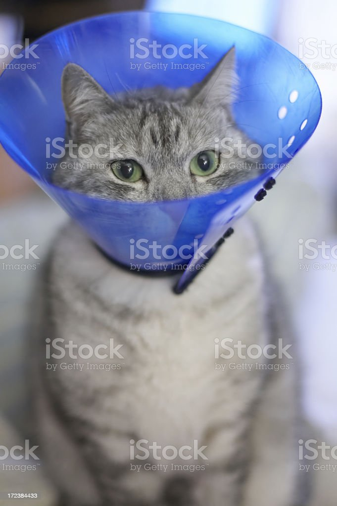 sick cat stock photo