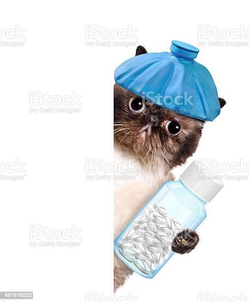 Sick cat picture id491916033?b=1&k=6&m=491916033&s=612x612&h=j6d2znswus bcg7onlyvvbu6 gkjjxow8qyzgjgayla=