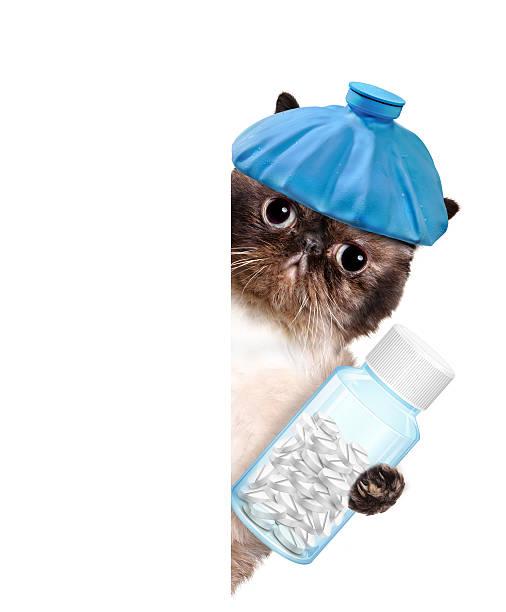 Sick cat picture id491916033?b=1&k=6&m=491916033&s=612x612&w=0&h=tchbulv3xctmf6uk rma9p4bzxarsnwlhkk3yfyhbdo=